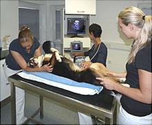 Ultraschall Gerät Titan